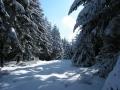 schneifel
