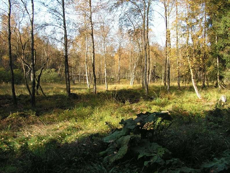 Herbst im Trufffenn
